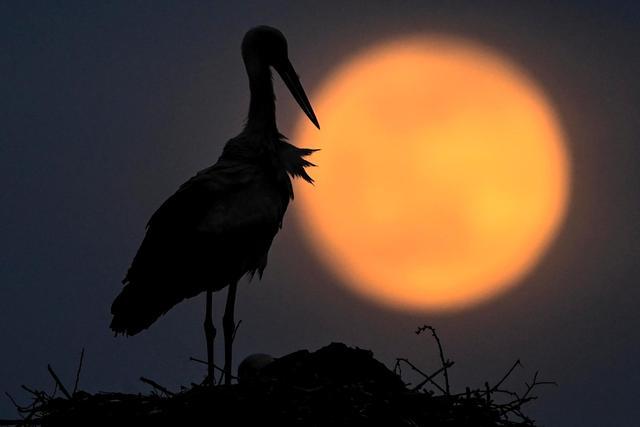 今晚超级月亮再次出现,上次错过的这次可不要错过了~